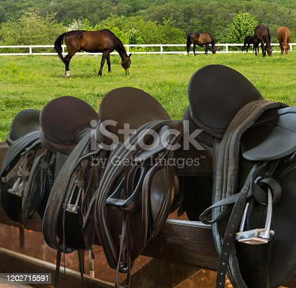 Horse Gallops Field Rider Leather Saddles equestrian with stirrups on fence