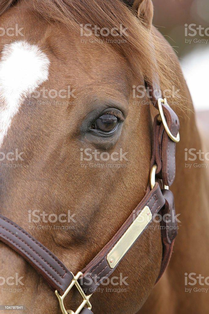 Horse Glare royalty-free stock photo
