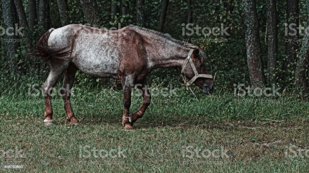 Horse grassing on meadow stock photo
