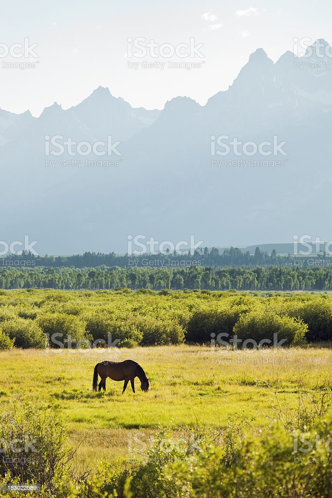 Horse Grazing at Grand Teton National Park Vt royalty-free stock photo
