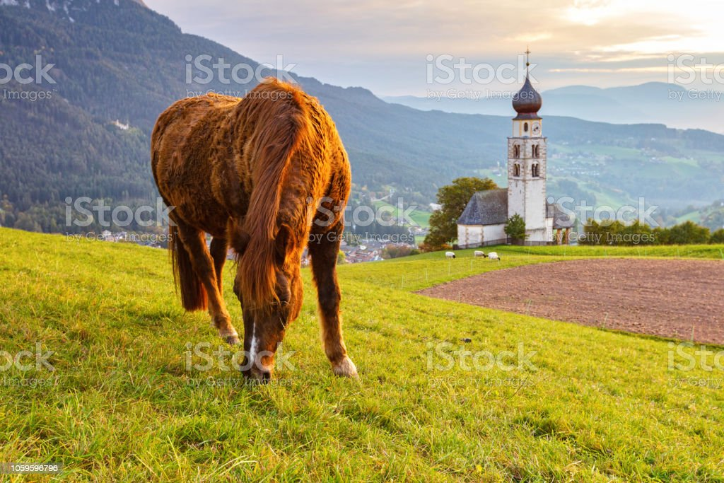 Horse grazing at green aplean meadow at sunset stock photo