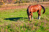 Horse grazing at the edge of the village . Domestic horse at the meadow