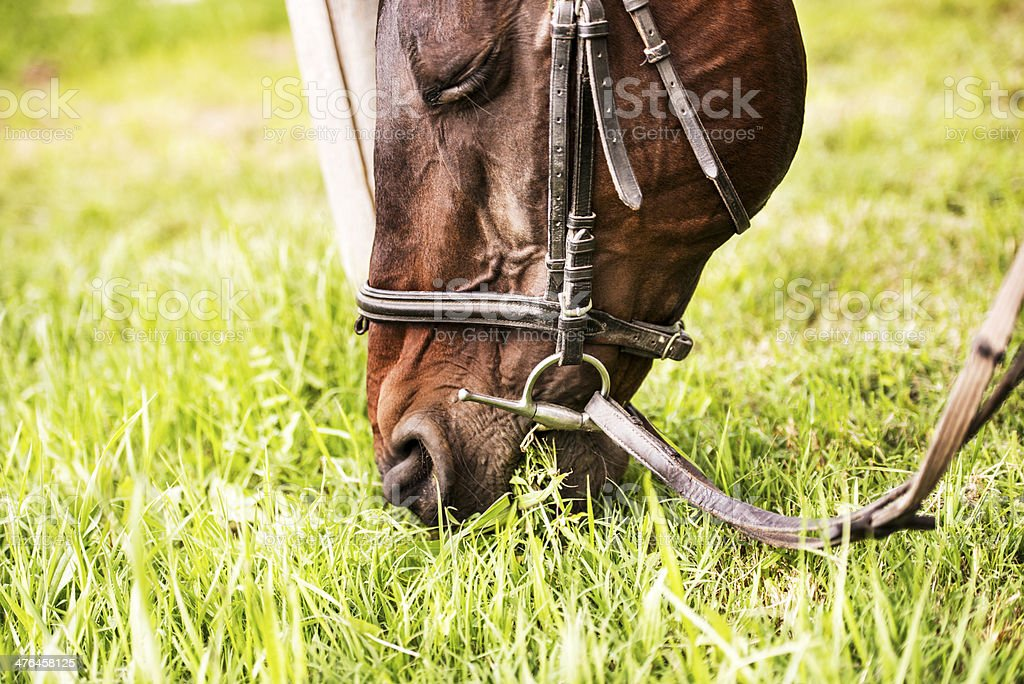 Horse grazing grass. royalty-free stock photo