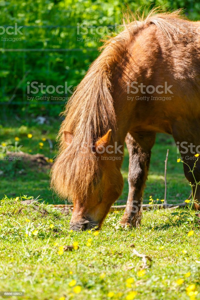 Horse grazing in a meadow of grass in summer royalty-free stock photo