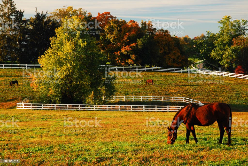 Horse grazing in autumn stock photo