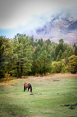Horse Grazing in Mountain Pasture on Foggy Autumn Morning