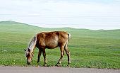 Horse grazing in springtime pasture
