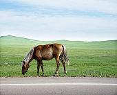 Horse grazing in springtime pasture.