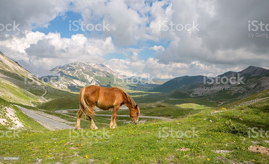 Horse grazing on Campo Imperatore, Province of l'Aquila, Abruzzi Italy stock photo