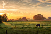 Horse grazing on a foggy morning at sunrise in orange sunbeams in rural landscape. Peaceful scene. Kortanaken, Flanders, Belgium, Europe