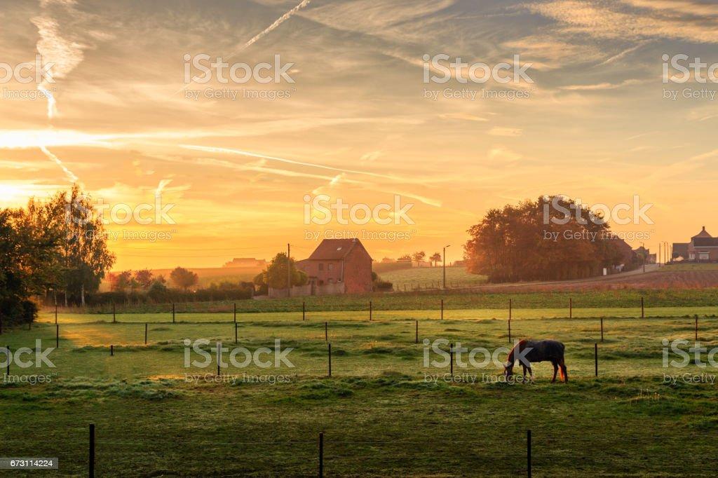 Horse grazing on foggy morning at sunrise (Kortenaken, Belgium) stock photo