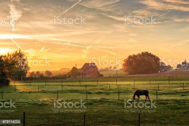 Photo of Horse grazing on foggy morning at sunrise (Kortenaken, Belgium)