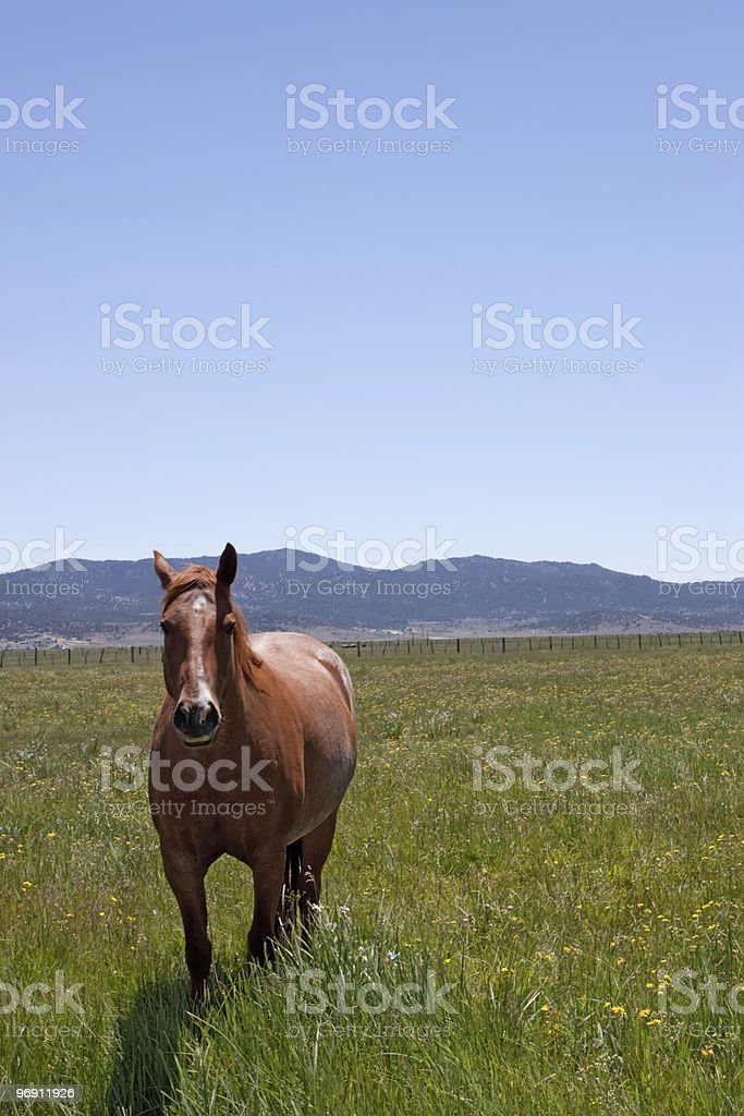 Horse grazing on green grass royalty-free stock photo