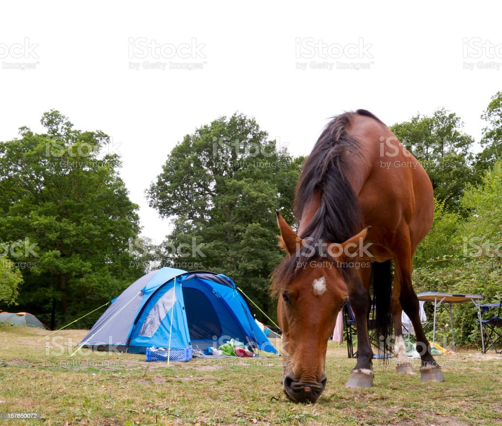 Horse grazing on New Forest campsite stock photo