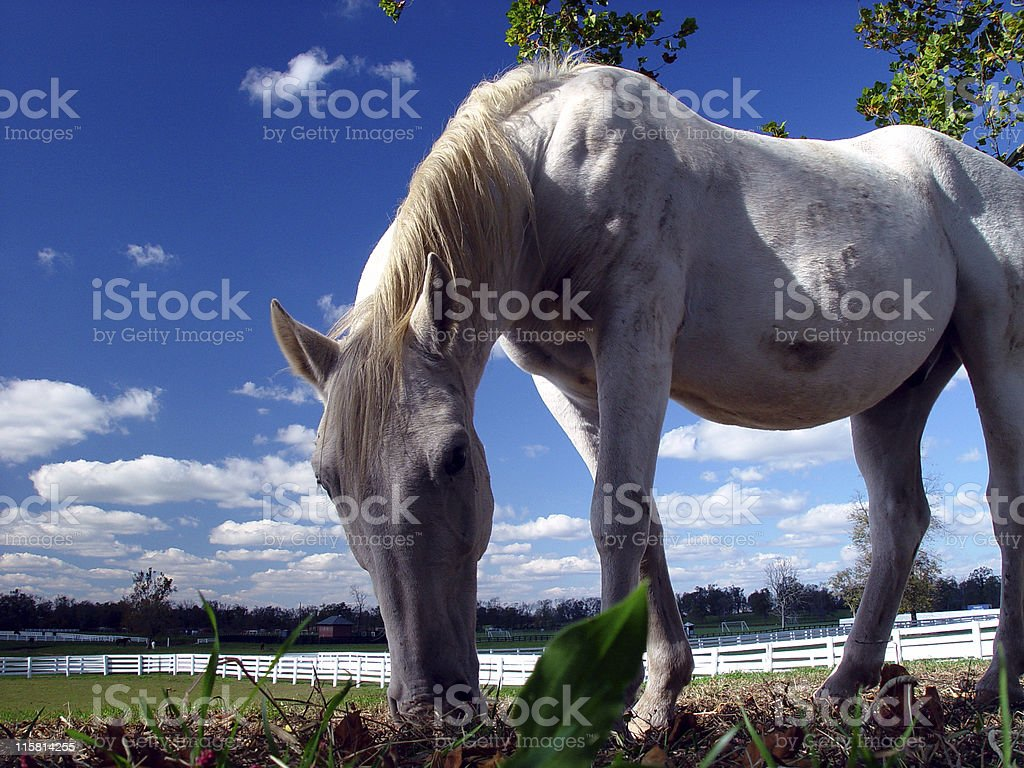Horse Grazing royalty-free stock photo
