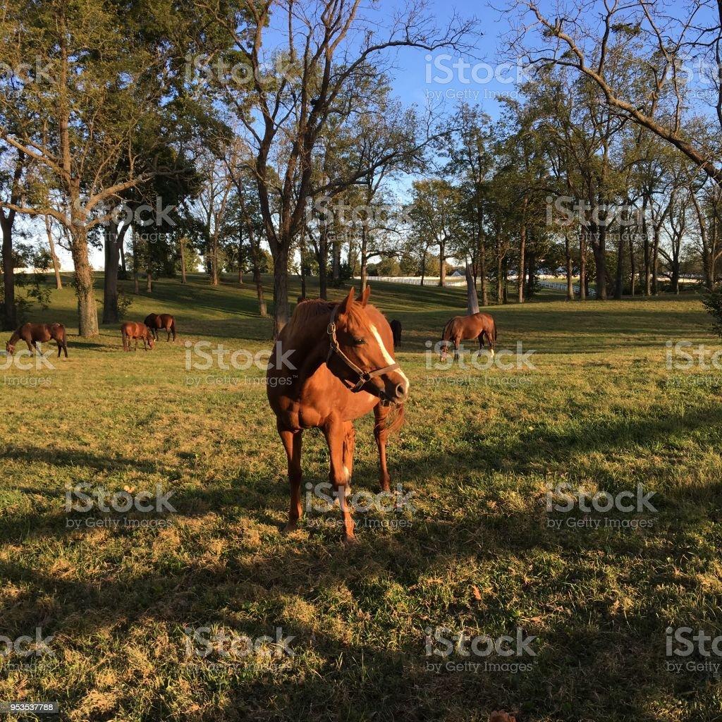 Horse grazing stock photo