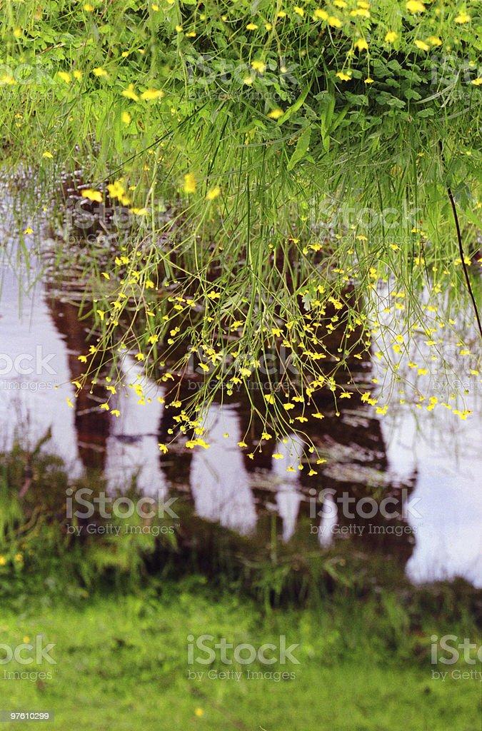 Horse grazing riverside royaltyfri bildbanksbilder