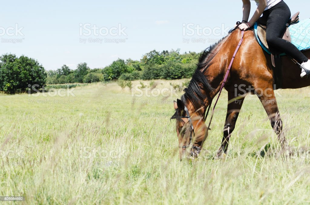 horse grazinng grass stock photo