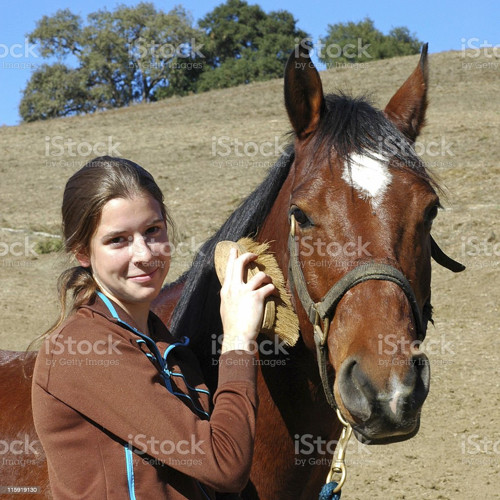 horse grooming by teenage female stock photo