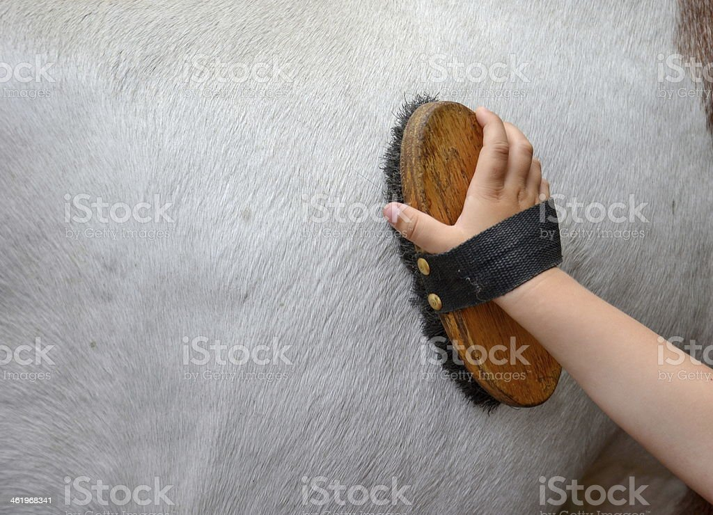 horse grooming stock photo