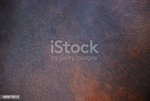 istock Horse hair background 485879315
