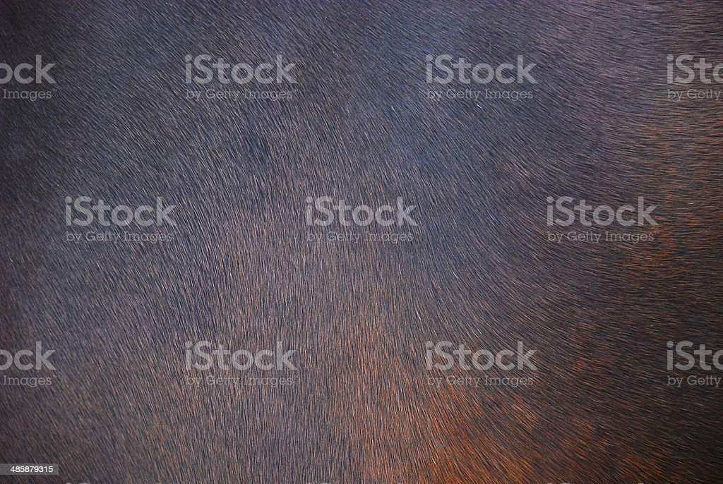 Horse hair background stock photo