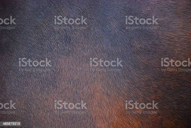 Photo of Horse hair background