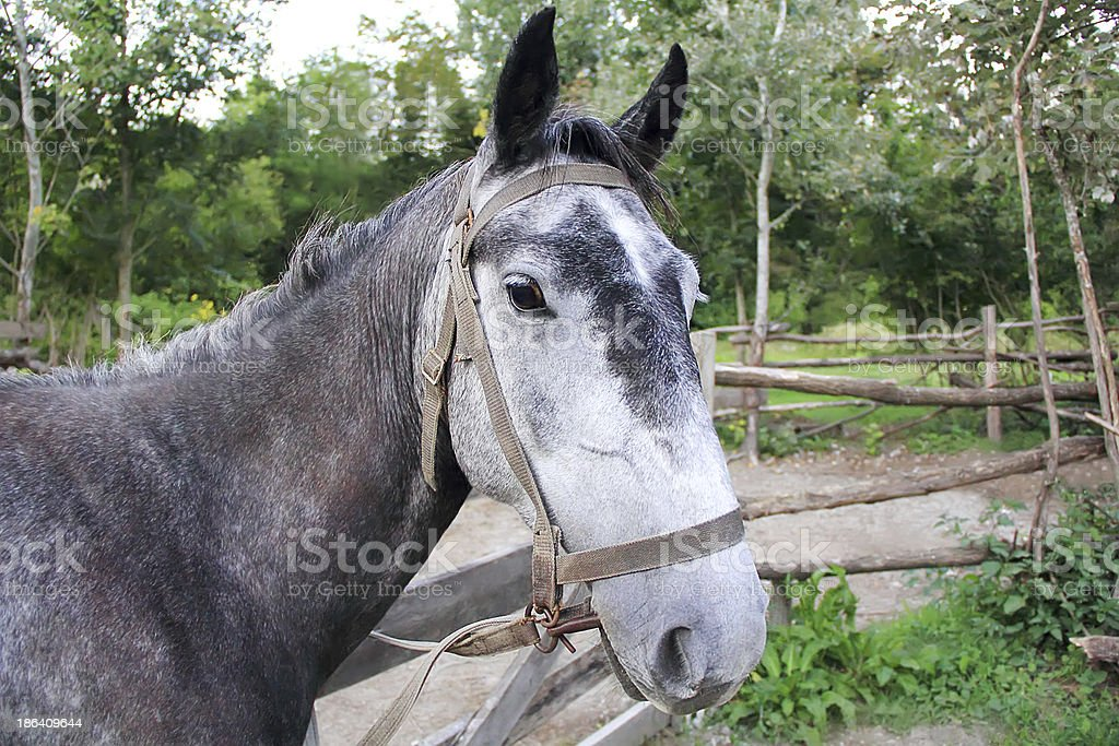 Horse head and eye royalty-free stock photo