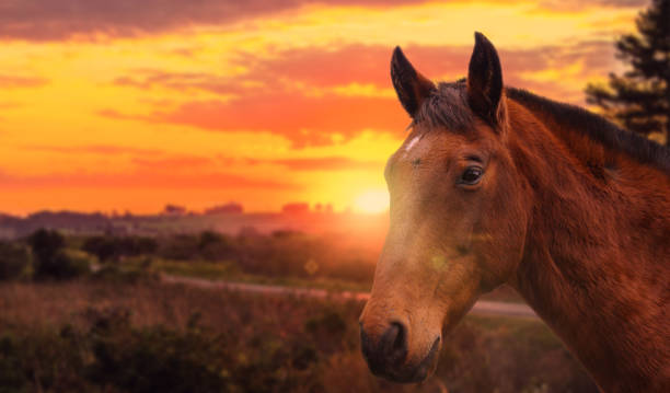 Horse head closeup in sunset road landscape stock photo