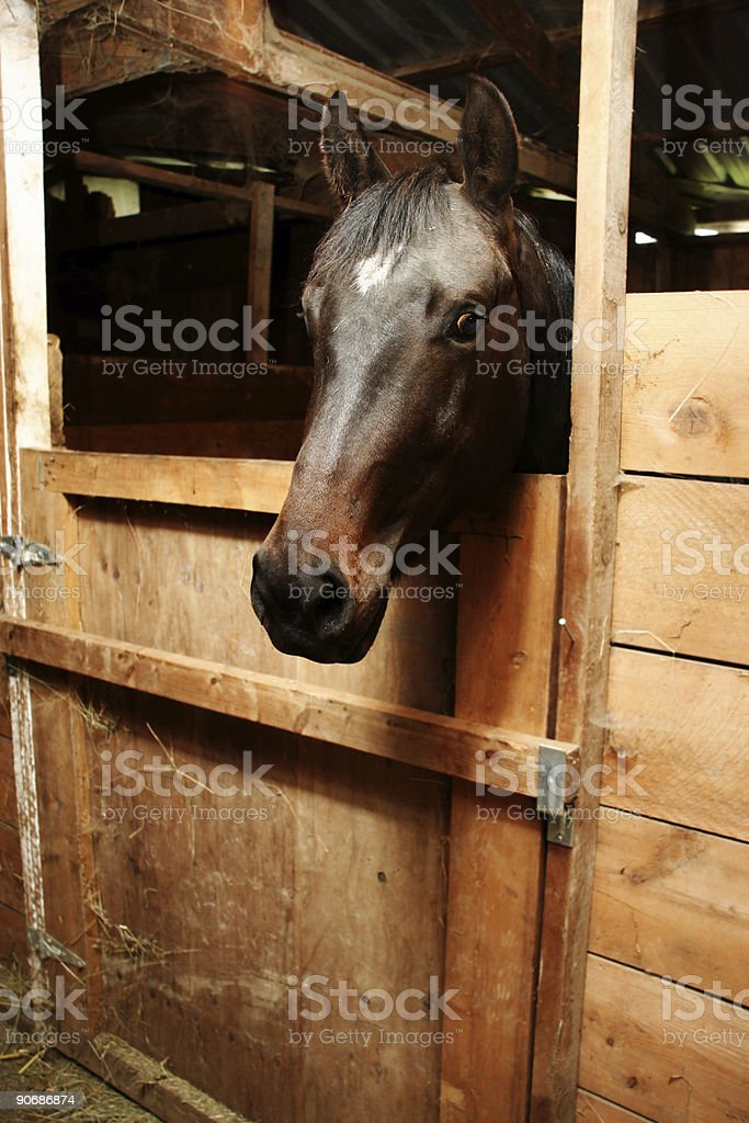 Horse Head in its Stall stock photo