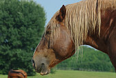 Horse head on a dry and warm summer day near the water trough
