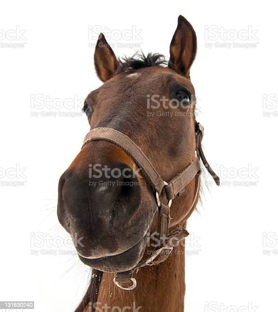 Horse head picture id131630240?b=1&k=6&m=131630240&s=612x612&h=x  fcwz5f  qdngjjnlhmojbhlechnvp2658sz7tcl0=