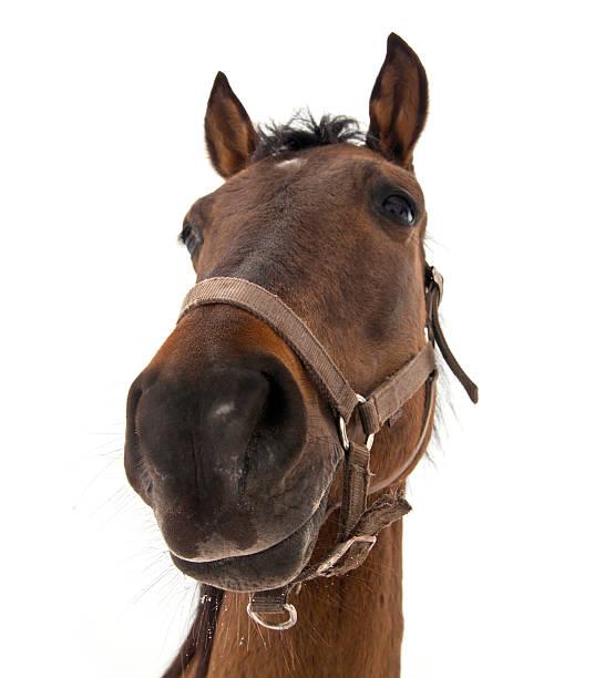 Horse head picture id131630240?b=1&k=6&m=131630240&s=612x612&w=0&h=sjfi7vumyhalbz7xr18taeoaq4y9sue5rpyi7rixm5s=