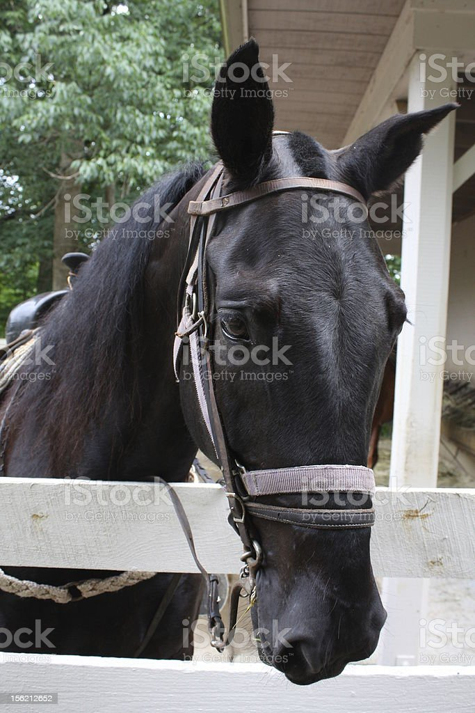 Horse Head Riding horses head standing at a fence. Animal Stock Photo