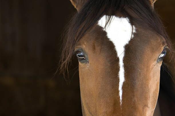 Horse head picture id157193207?b=1&k=6&m=157193207&s=612x612&w=0&h=injgnavn5b014ku4vtilrgdn4ngp4dynyr74d6wax1k=