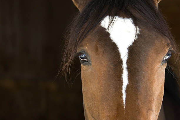 horse head - animal markings stock pictures, royalty-free photos & images