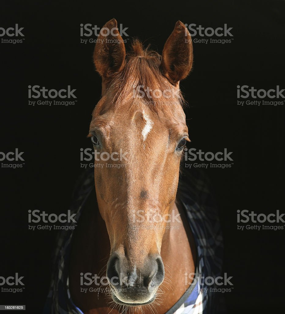 Horse head royalty-free stock photo