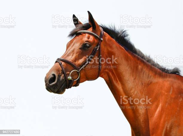 Horse head picture id942727430?b=1&k=6&m=942727430&s=612x612&h=js3 sy9idx5caie ldvcvj1kbcm8d24k65nhjex91jm=