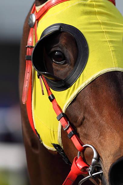 pferde kopf mit scheuklappe - scheuklappe stock-fotos und bilder