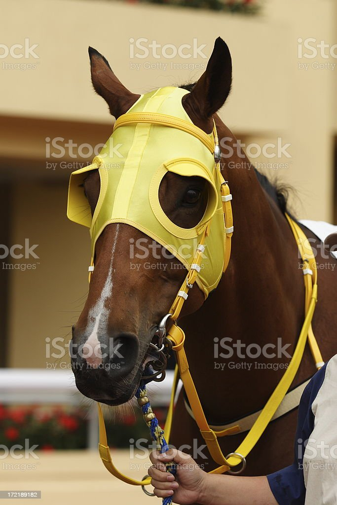 Horse head with Blinders stock photo