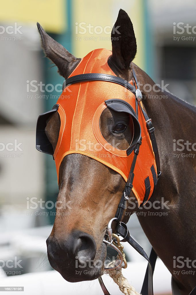 Horse head with Orange Blinders stock photo