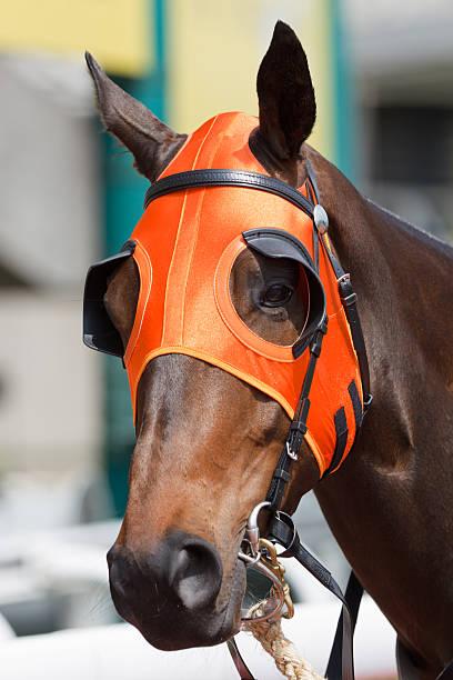 pferde kopf mit orange scheuklappe - scheuklappe stock-fotos und bilder
