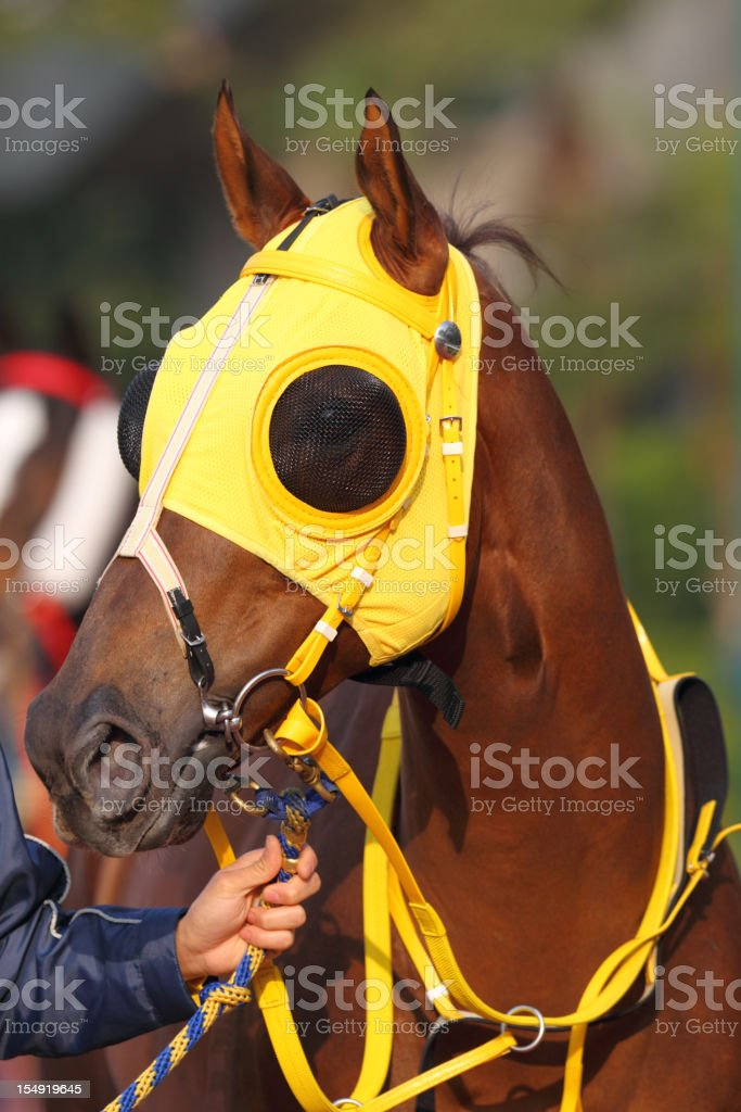 Horse Head With Yellow Blinders Stock Photo Download Image Now Istock