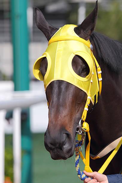 pferde kopf mit gelben scheuklappe - scheuklappe stock-fotos und bilder