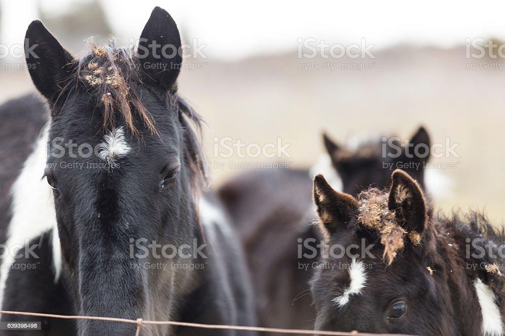 Horse heads stock photo