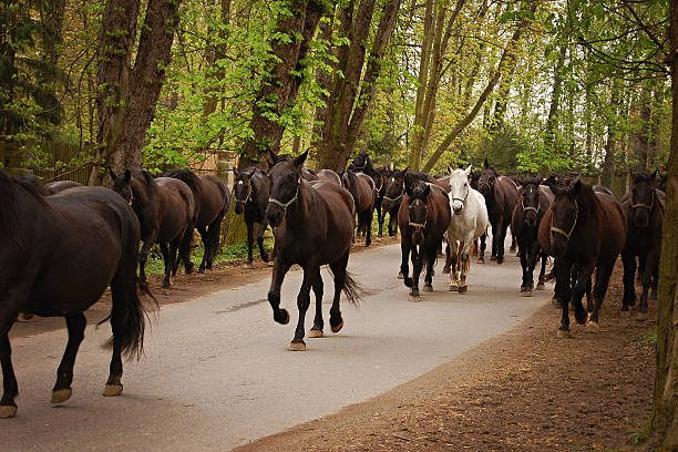 Horse herd on road in alley stock photo