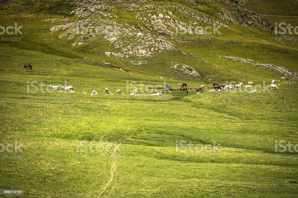 horse herd pasture at green meadow in the mountains,France royalty-free stock photo