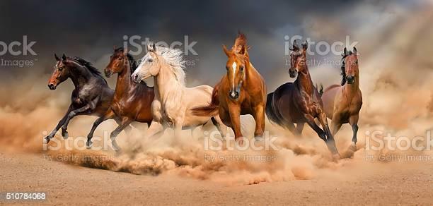Horse herd picture id510784068?b=1&k=6&m=510784068&s=612x612&h=hmnryvlu dz5dhz4gxuclv6hzujmbdaj x78am5l pi=