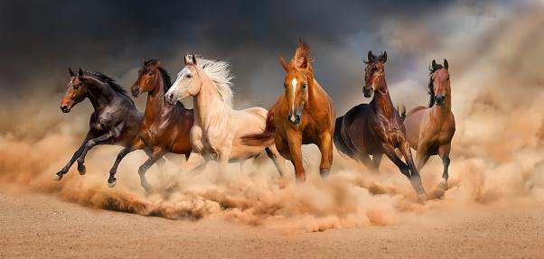 Horse Herd 照片檔及更多 全景 照片