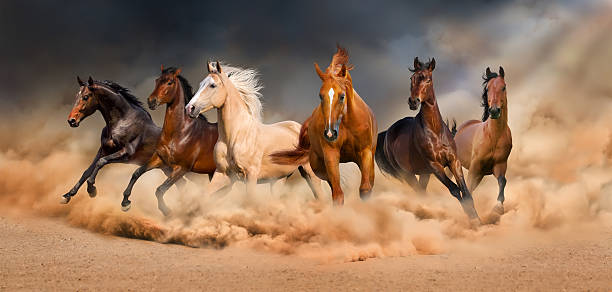 horse herd - horse stock pictures, royalty-free photos & images